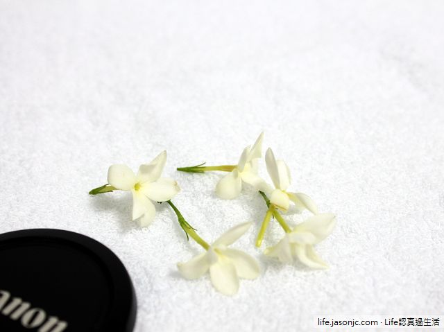芬芳的秀英花與堅硬的秋葵子