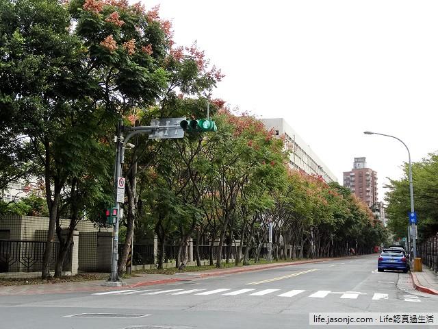 台灣欒樹 | 台北內湖