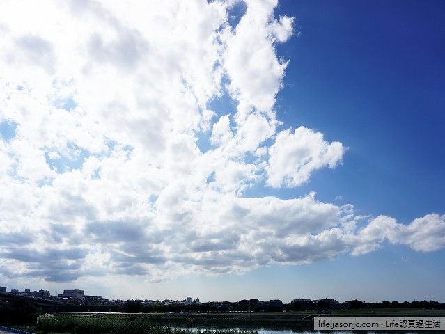 彩虹河濱公園、麥帥橋下的向日葵花海 | 台北市內湖區